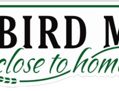 Red Bird Market